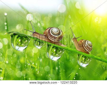 Snails on dewy grass close up