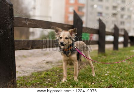 Stray mixed breed dog standing portrait outdoor