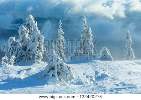 Icy Snowy Fir Trees On Winter Hill.