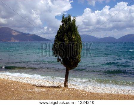 Tree & Sea