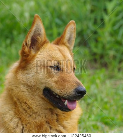 Outdoor portrait of cute mixed breed dog