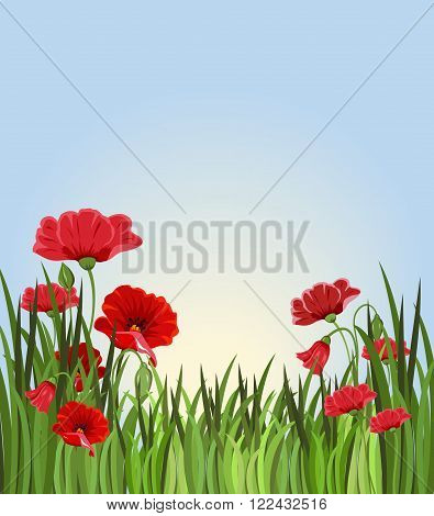 Summer background with grass and red flowers. Flower meadow against the sky