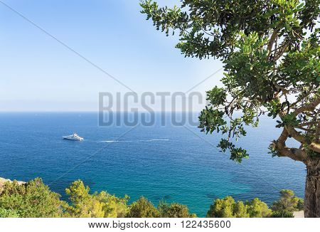 Summer time. Yacht in the mediterranean turquoise waters of Ibiza island and a carob tree on the foreground
