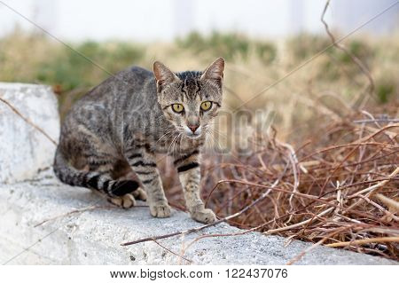 Small homeless young cat on a yard
