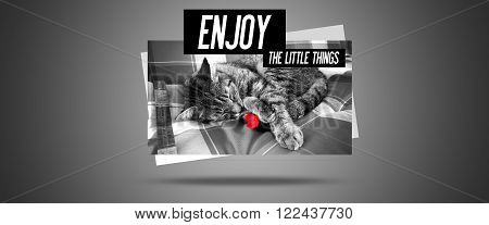 Inspirational Moment Quote Website - Cat Enjoying a little beautiful red Flower - Enjoy the Little Things in Life - Reminding us to appreciate even the simple Moments in Life