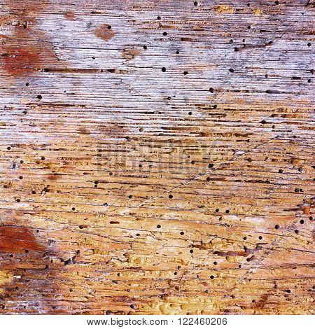 texture of old rotten wood eaten by worm. square photo with copy space for text