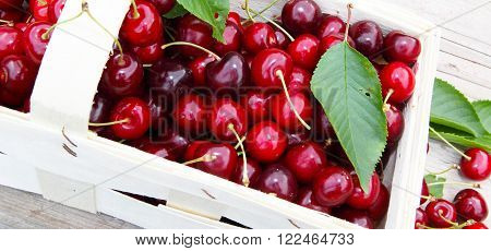 A basket of freshly picked cherries is at garden table