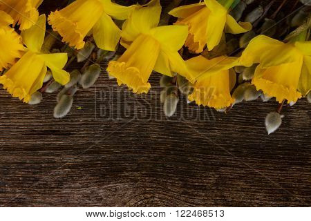 spring fresh  yellow daffodil flowers with catkins border on wooden background