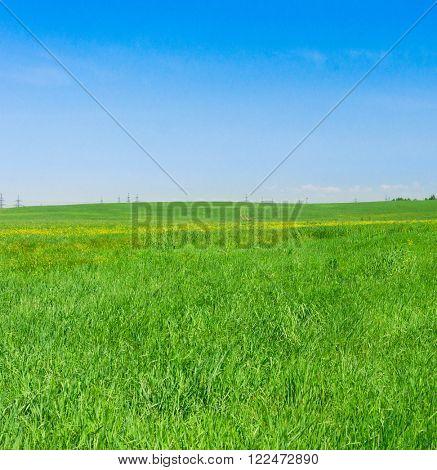 Green Plain Sunny Summertime