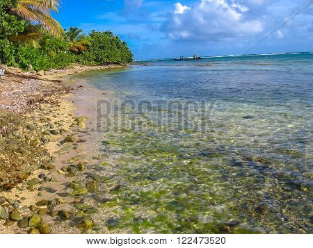 Tropical Caribbean beach with coral reef in Guadeloupe, Antilles, Caribbean with copy space.