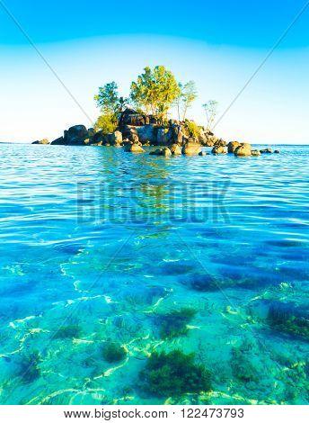 Lagoon Corals Scene