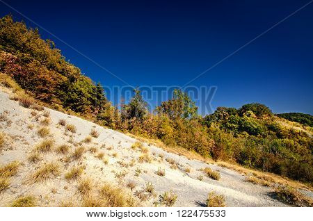 Top of a mountain covered with trees and grass. Autumn landscape with cloudless sky