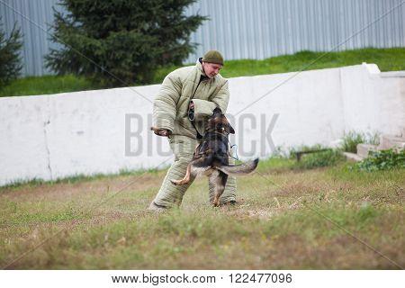 Omsk, Russia - August 22, 2014:  Canine Center. German shepherd training