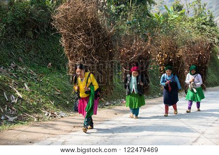 HAGIANG, VIETNAM, OCT 26: Unidentified H'mong ethnic minority women carry dry trees on road. Ha Giang stone highland has Dong Van Karst Plateau Global Geopark.