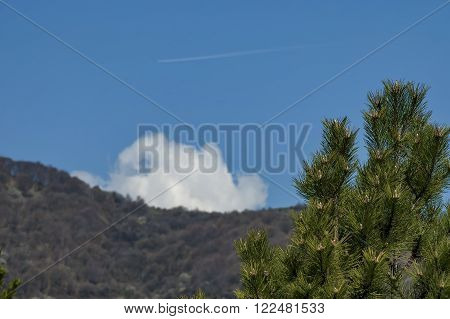 Christmas background with pine or pinus tree branch, mountain and sky, Sofia, Bulgaria