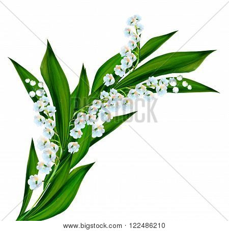 flowers lily of the valley. Flowers of lilies of the valley isolated on white background.