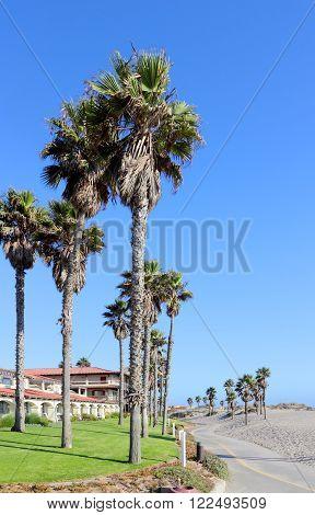 Costal Palms along Mandalay Beach Walkway, Oxnard, CA