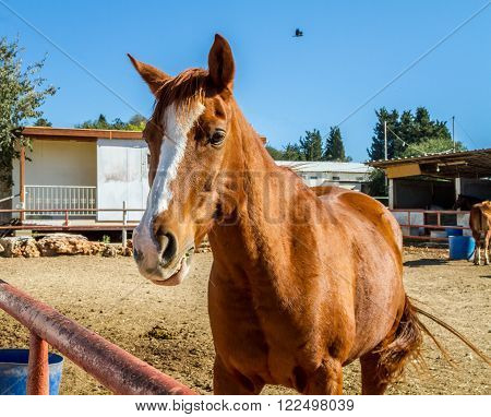Brown horse with a white stripe
