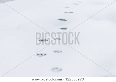 The dog's footprints on the winter snowfield