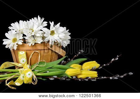 Yellow tulips and pussy willow with daisy bouquet in wooden basket isolated on black.