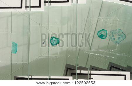 Slide For Optical Microscope
