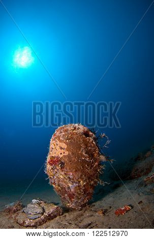 Giant shell immersed in the sand under the sea