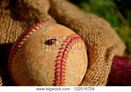 A lady bug crawls between the red seams of an old baseball lying deep in the pocket of a vintage mitt.