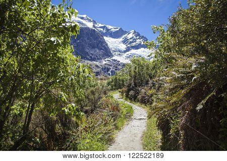 Rob Roy Glacier National Park New Zealand