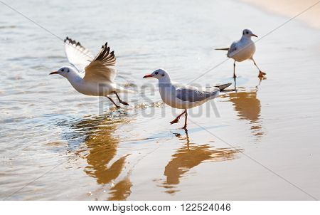 Three seagulls on the beach on a background of wet sand at the water's edge. Shallow depth of field. Selective focus.
