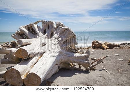 Driftwood At The Beach New Zealand West Coast