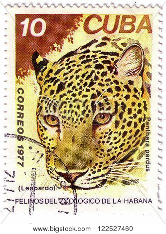 Cuba- Circa 1977: A Stamp Printed In Cuba, Shows Wild Cats Leopard, Series, Circa 1977