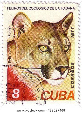 Cuba - Circa 1977: A Stamp Printed In Cuba, Shows Wild Cats Puma, Circa 1977
