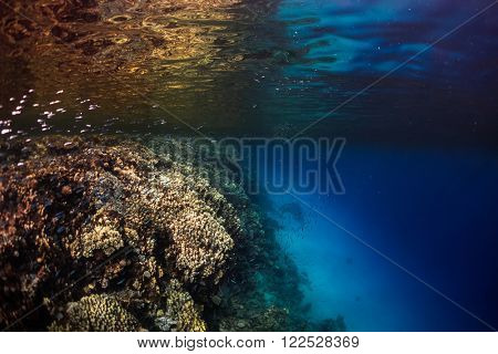Underwater shot of the vivid coral reef wall. Red Sea, Egypt