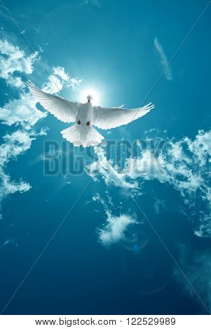 Dove in the air with wings wide open in front of bright sun symbol of faith