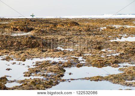 Oozy and stony coast surfer silhouette afar selective focus