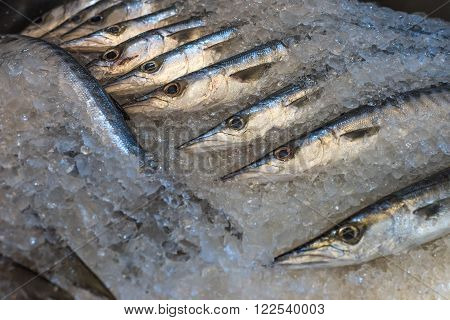 Highly deatailed image of fresh barracuda at a fish market