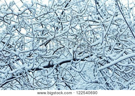 interlacing branches covered with snow in the background