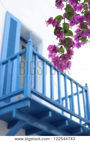 Pink bougainvillea flowers Against the backdrop of a blue wooden balconies.
