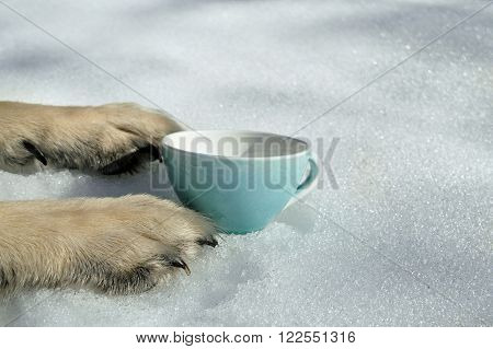 An empty bowl placed between the dog