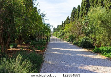 path of crushed stone with trees and shrubs around the edges in a city park