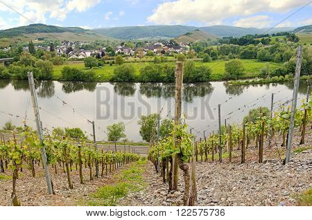 Mülheim Village On The Wine Route, Moselle River