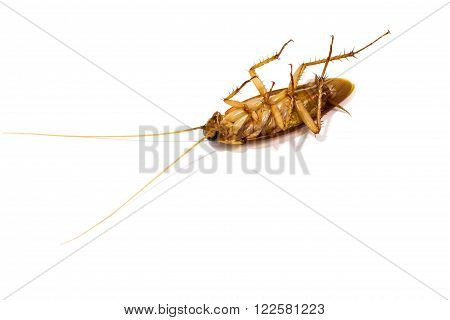 Dead cockroaches isolated on a white background