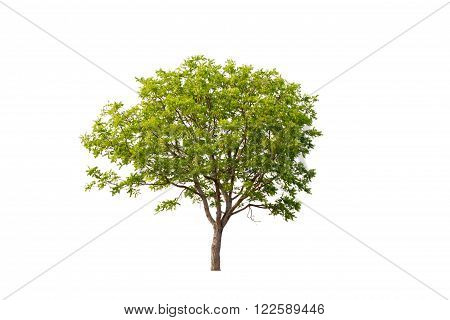Tree image, Tree object, Tree JPG isolated on white background