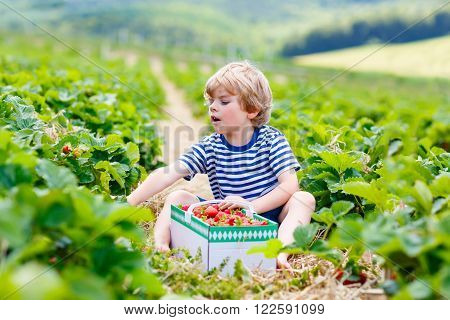 Funny little kid boy picking and eating strawberries on organic bio berry farm in summer, on warm sunny day. Harvest fields in Germany. Healthy food for children.