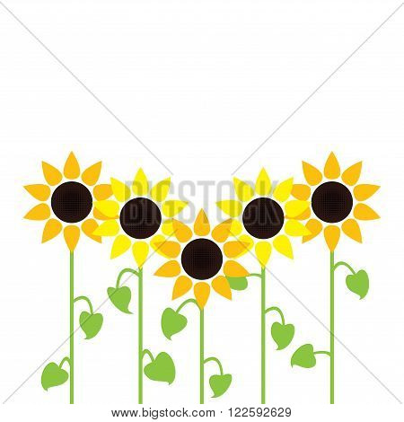 vector  summer sunflowers isolated on white background