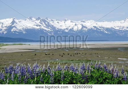 Eagle Beach near Juneau Alaska looking towards the Chilkat Mountain Range