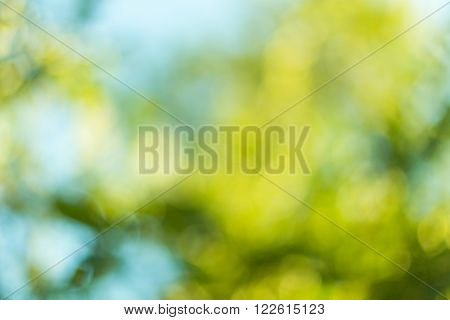 Blurred leaves on the tree abstract nature background