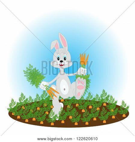 Happy bunny running with a bunch of carrots on the field with carrot