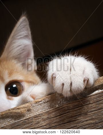 Paw cat on old wooden board. Sharp talons