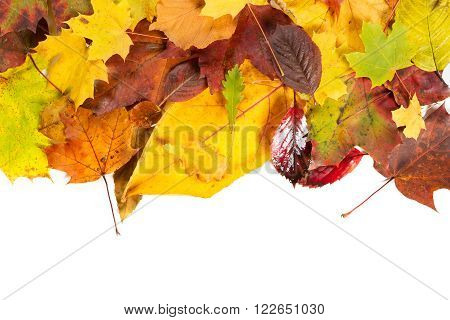 Autumn fall leaves colourfull background on white